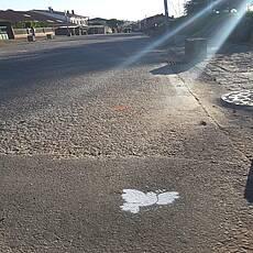 Jerusalemweg pigeon